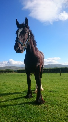 Alfie the horse