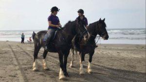 Bonus Dyfed Shires Horse