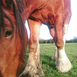 Ed from Dyfed Shires Horse Farm