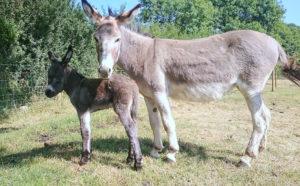 Animals at Dyfed Shires Farm