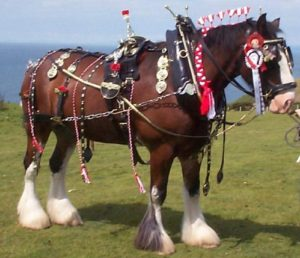 Other Shire Horses from Dyfed Shires