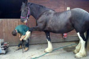 Santes Shire Horse Wales